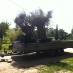 Transport avec Colis PLus (19)