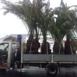 Transport avec Colis PLus (10)
